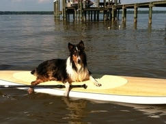 review Beautiful Stand Up Paddleboard